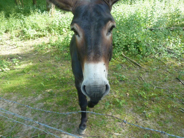 Who doesn't love a donkey. You just want to em-BRAY-s them.