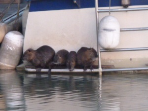 And finally the whole family were sunning themselves on the back of someone else's boat. Looks like no ones lived on board for a while so these guys have moved in.
