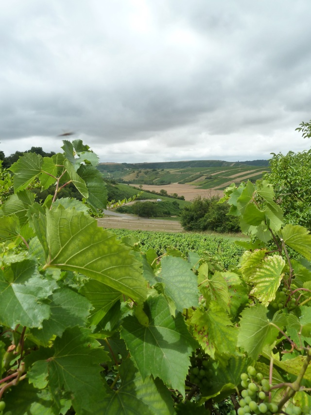 The lovely vineyards of Sancerre