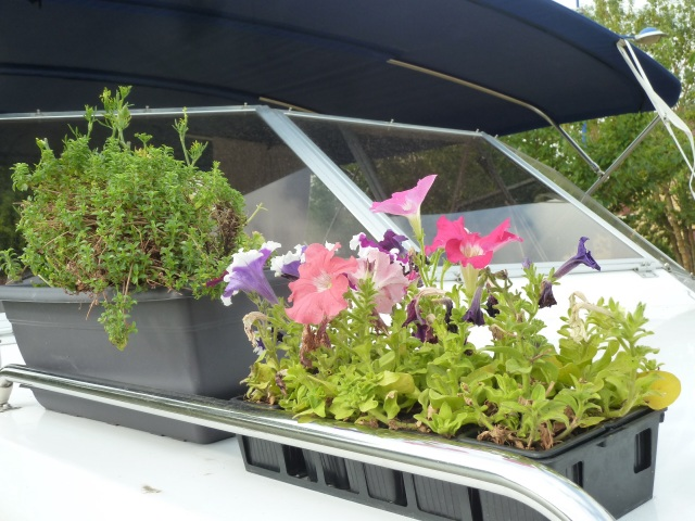 One of the two planter boxes on board this year.