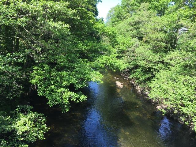 Dart River
