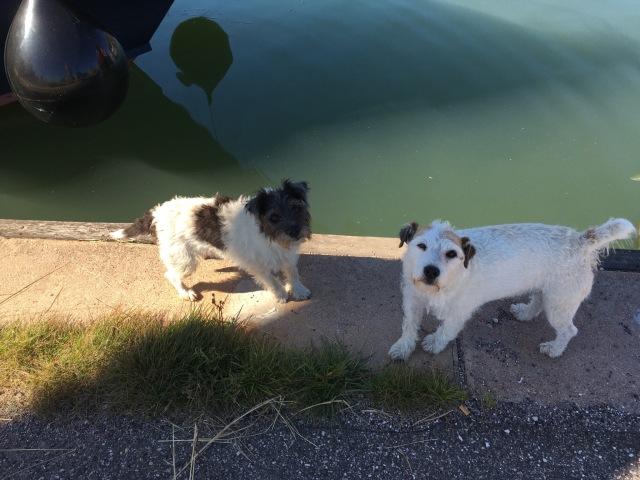 Little helpers. Meet Meg and Billy.